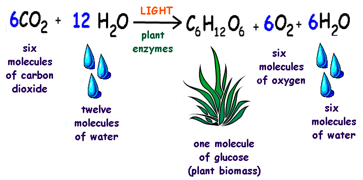 product of photosynthesis