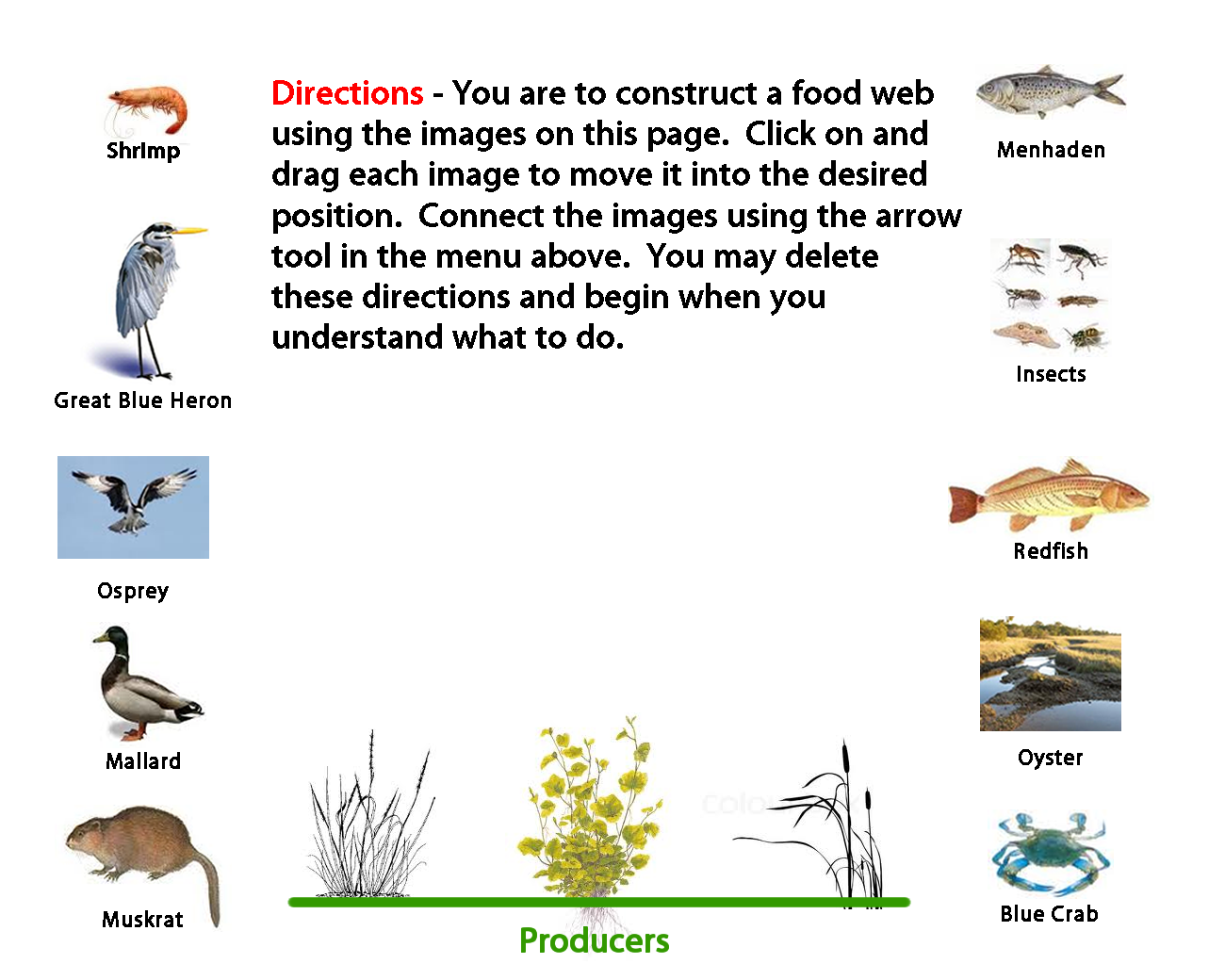 Printables Create A Food Web Worksheet redo png 7 food web webpage activity designed to construct