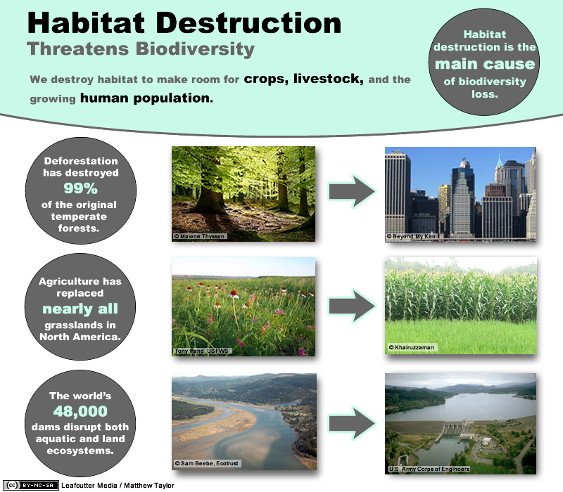 destruction of biodiversity Compared to other threats to biodiversity, invasive introduced species rank second only to habitat destruction, such as forest clearing of all 1,880 imperiled.