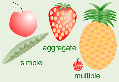 Gallery For > Angiosperm Fruit Examples 10 Examples Of Monocot Plants